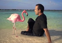 The Mystery of the Pink Flamingo - by Javier Polo - FIPADOC 2021 - Competition